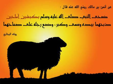 Hukum Seputar Qurban
