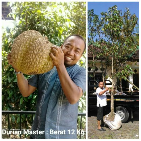 Wakaf Pohon Durian Master